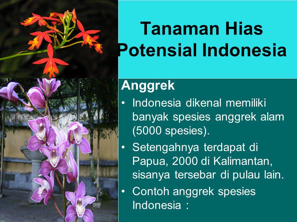 Tanaman Hias Potensial Indonesia Anggrek Indonesia dikenal memiliki banyak spesies anggrek alam (5000 spesies).