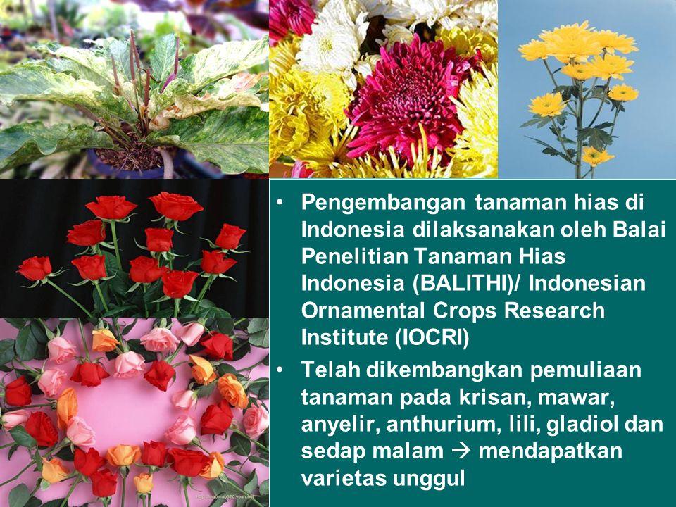 Pengembangan tanaman hias di Indonesia dilaksanakan oleh Balai Penelitian Tanaman Hias Indonesia (BALITHI)/ Indonesian Ornamental Crops Research Institute (IOCRI) Telah dikembangkan pemuliaan tanaman pada krisan, mawar, anyelir, anthurium, lili, gladiol dan sedap malam  mendapatkan varietas unggul
