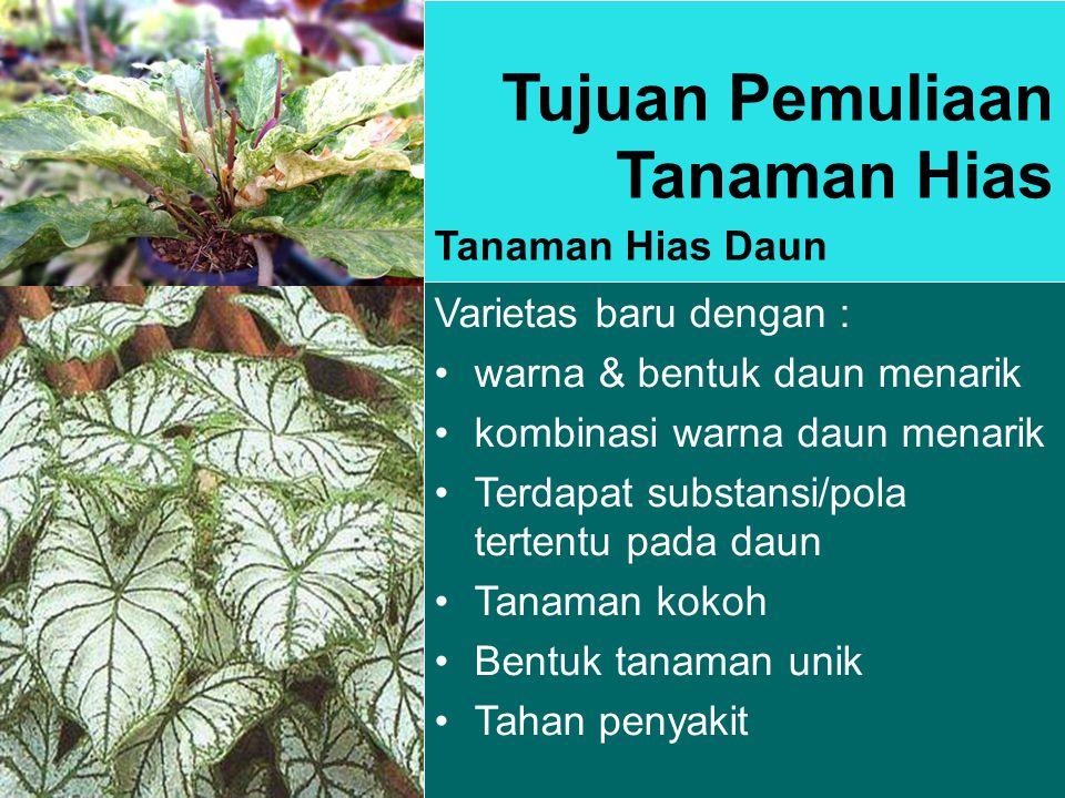 Tujuan Pemuliaan Tanaman Hias Tanaman Hias Daun Varietas baru dengan : warna & bentuk daun menarik kombinasi warna daun menarik Terdapat substansi/pola tertentu pada daun Tanaman kokoh Bentuk tanaman unik Tahan penyakit