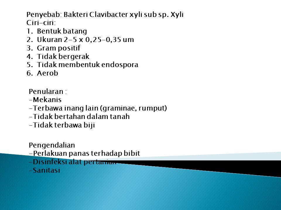 Penyebab: Bakteri Clavibacter xyli sub sp. Xyli Ciri-ciri: 1.Bentuk batang 2.Ukuran 2-5 x 0,25-0,35 um 3.Gram positif 4.Tidak bergerak 5.Tidak membent