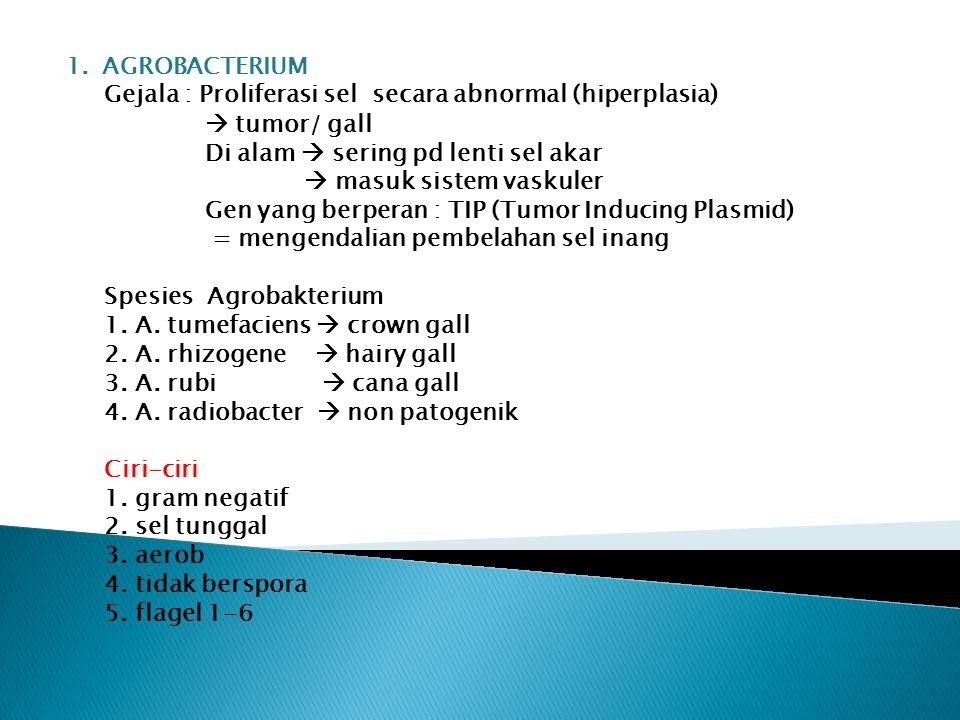 1.AGROBACTERIUM Gejala : Proliferasi sel secara abnormal (hiperplasia)  tumor/ gall Di alam  sering pd lenti sel akar  masuk sistem vaskuler Gen ya