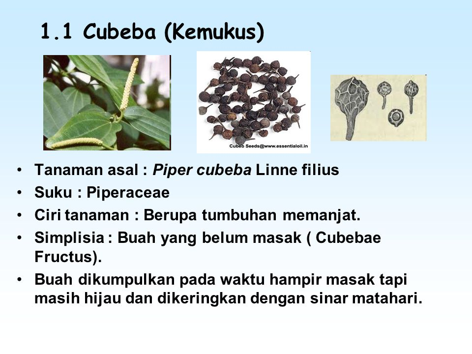 1.1 Cubeba (Kemukus) Tanaman asal : Piper cubeba Linne filius Suku : Piperaceae Ciri tanaman : Berupa tumbuhan memanjat. Simplisia : Buah yang belum m