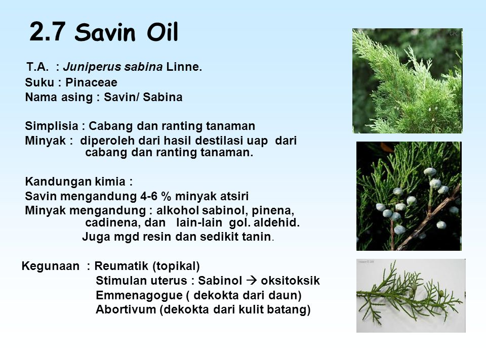 2.7 Savin Oil T.A. : Juniperus sabina Linne. Suku : Pinaceae Nama asing : Savin/ Sabina Simplisia : Cabang dan ranting tanaman Minyak : diperoleh dari