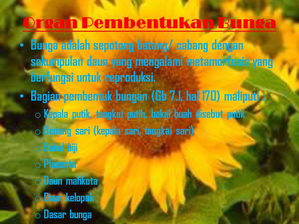 Modifikasi Bunga Bunga mengalami keanekaragaman bentuk meliputi : Jumlah dan susunan bungan (Gb 7.4, 7.5,7.6) (magnolia, Ranuculus) Peleburan bunga (Glecema hederacea) Simetri bunga (tomat, apel, kangkung, mawar) Ketidaklengkapan bunga (mentimun, jagung, kurma, salak) (Gb 7.12, 7.13)