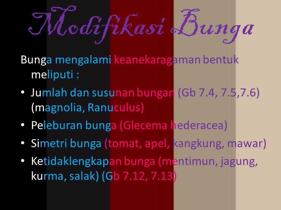 Modifikasi Bunga Bunga mengalami keanekaragaman bentuk meliputi : Jumlah dan susunan bungan (Gb 7.4, 7.5,7.6) (magnolia, Ranuculus) Peleburan bunga (G