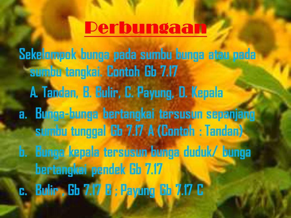 Perbungaan Sekelompok bunga pada sumbu bunga atau pada sumbu tangkai. Contoh Gb 7.17 A. Tandan, B. Bulir, C. Payung, D. Kepala a.Bunga-bunga bertangka