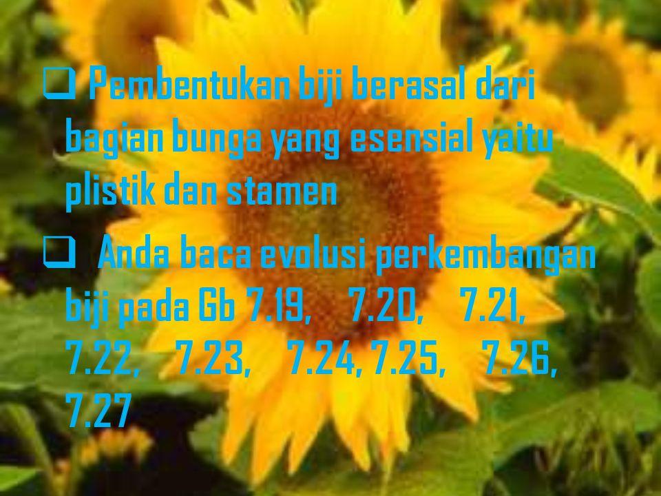  Pembentukan biji berasal dari bagian bunga yang esensial yaitu plistik dan stamen  Anda baca evolusi perkembangan biji pada Gb 7.19, 7.20, 7.21, 7.