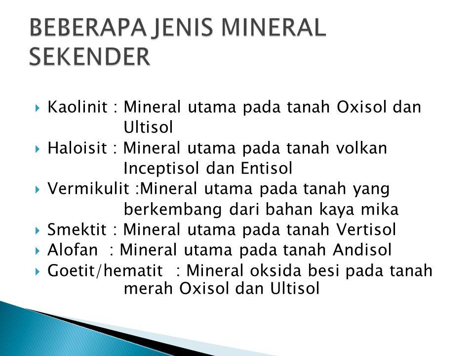 Kaolinit : Mineral utama pada tanah Oxisol dan Ultisol  Haloisit : Mineral utama pada tanah volkan Inceptisol dan Entisol  Vermikulit :Mineral uta