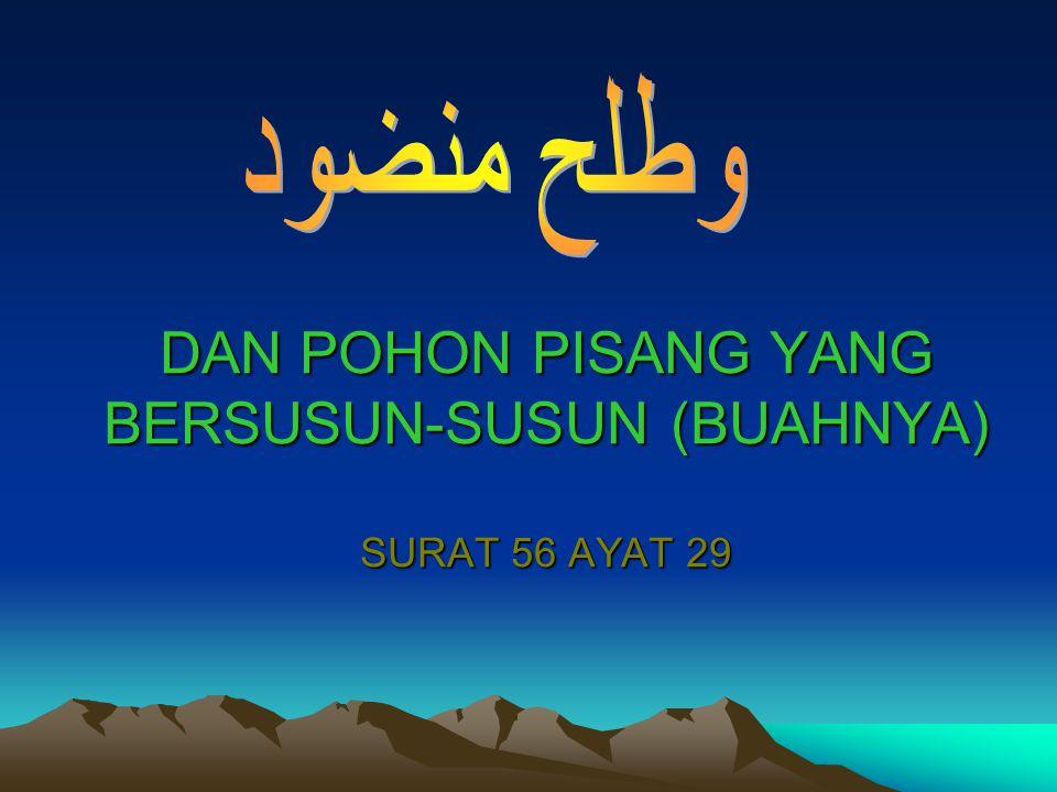 DAN POHON PISANG YANG BERSUSUN-SUSUN (BUAHNYA) SURAT 56 AYAT 29