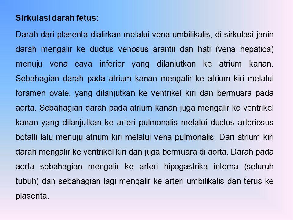 Sirkulasi darah fetus: Darah dari plasenta dialirkan melalui vena umbilikalis, di sirkulasi janin darah mengalir ke ductus venosus arantii dan hati (v