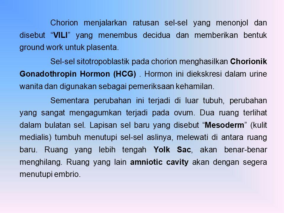 Diskus Embrionik Kini terdapat 3 lapisan sel-sel yang melapisi di antara Yolk Sac dan amniotic cavity.