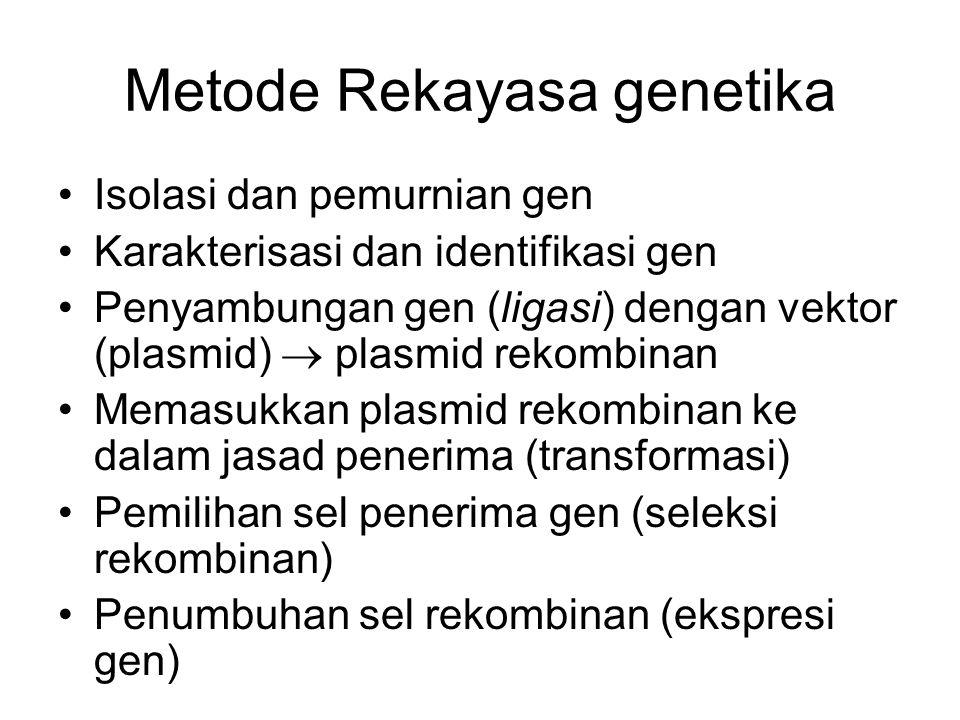 Metode Rekayasa genetika Isolasi dan pemurnian gen Karakterisasi dan identifikasi gen Penyambungan gen (ligasi) dengan vektor (plasmid)  plasmid reko