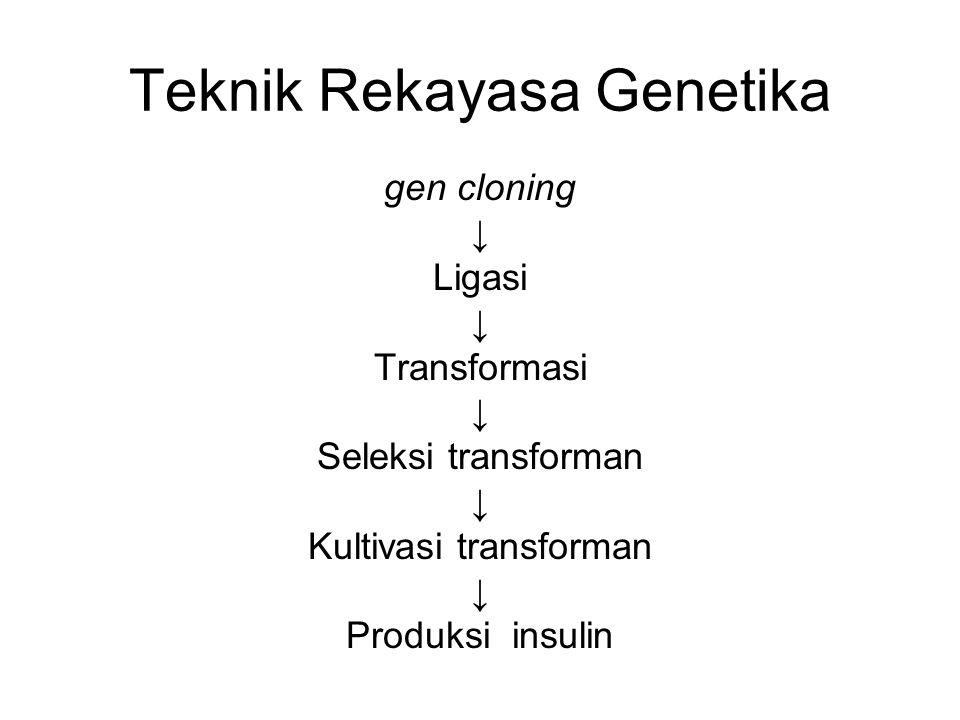 Teknik Rekayasa Genetika gen cloning ↓ Ligasi ↓ Transformasi ↓ Seleksi transforman ↓ Kultivasi transforman ↓ Produksi insulin