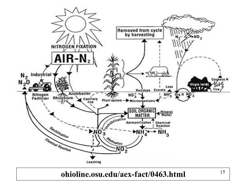 Pola fluktuasi musiman Nitrat tanah terdiri atas: 1. Akumulasi nitrat secara lambat dlm topsoil pd musim kering 2. Peningkatan cepat dlm waktu singkat
