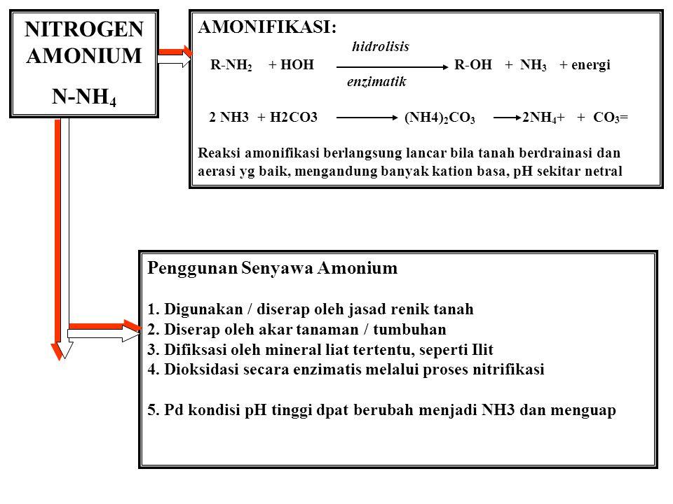 NITROGEN AMONIUM N-NH 4 AMONIFIKASI: hidrolisis R-NH 2 + HOH R-OH + NH 3 + energi enzimatik 2 NH3 + H2CO3 (NH4) 2 CO 3 2NH 4 + + CO 3 = Reaksi amonifikasi berlangsung lancar bila tanah berdrainasi dan aerasi yg baik, mengandung banyak kation basa, pH sekitar netral Penggunan Senyawa Amonium 1.