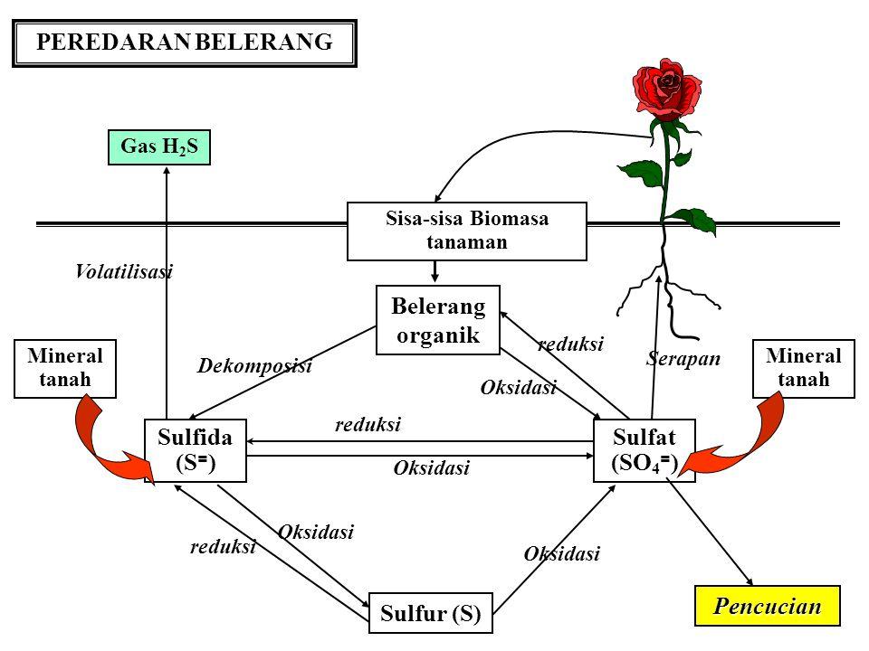 SUMBER BELERANG ALAMI Mineral Tanah: Sulfida besi, nikel dan tembaga biasanya dijumpai pada tanah- tanah yg drainasenya jelek Pirits juga sering dijum