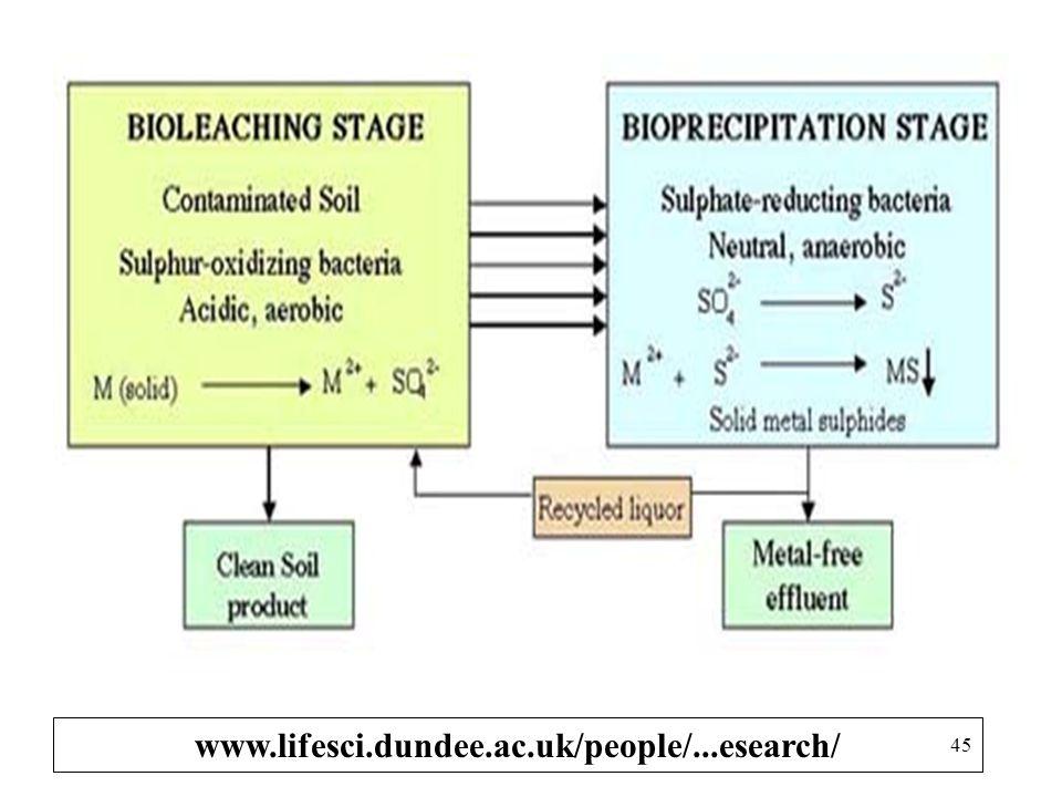 Perilaku Belerang dlm Tanah MINERALISASI - IMOBILISASI: Reaksi mineralisasi: S-Organik Hasil dekomposisi Sulfat (Protein & senyawa (Senyawa sulfida) O