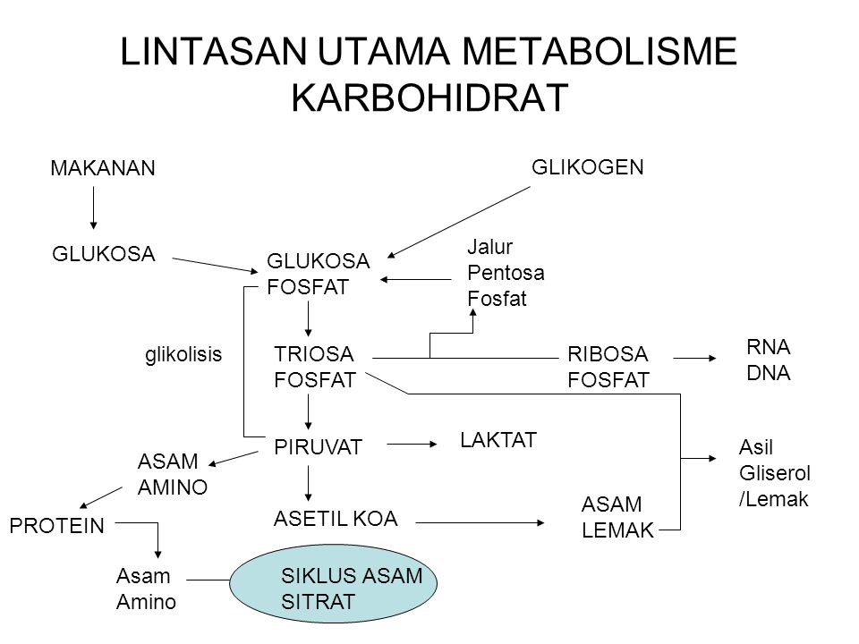 LINTASAN UTAMA METABOLISME KARBOHIDRAT MAKANAN GLUKOSA GLUKOSA FOSFAT TRIOSA FOSFAT PIRUVAT ASETIL KOA GLIKOGEN LAKTAT ASAM LEMAK SIKLUS ASAM SITRAT ASAM AMINO PROTEIN Asam Amino RIBOSA FOSFAT RNA DNA glikolisis Asil Gliserol /Lemak Jalur Pentosa Fosfat