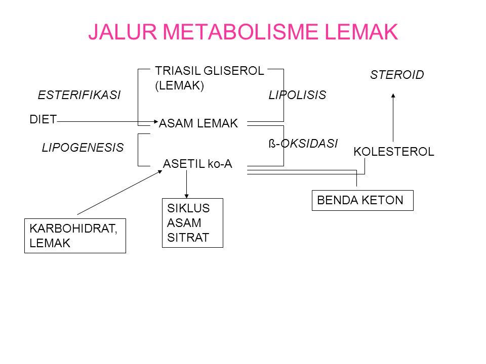 JALUR METABOLISME LEMAK TRIASIL GLISEROL (LEMAK) ASAM LEMAK ASETIL ko-A SIKLUS ASAM SITRAT ESTERIFIKASI LIPOGENESIS KARBOHIDRAT, LEMAK LIPOLISIS ß-OKSIDASI BENDA KETON KOLESTEROL STEROID DIET