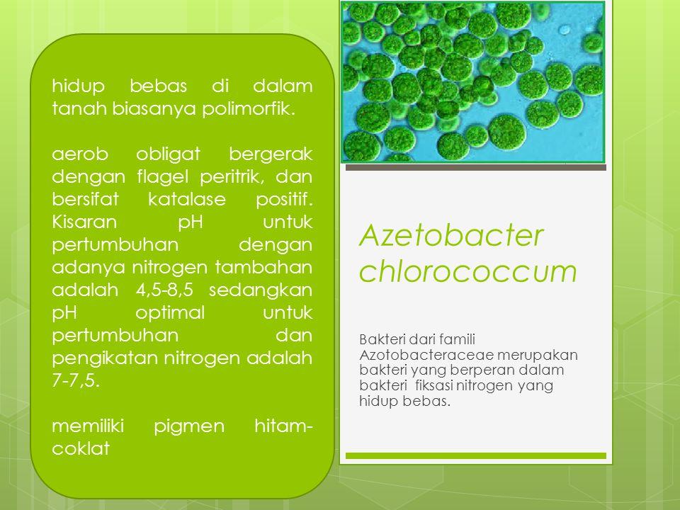 Azetobacter chlorococcum Bakteri dari famili Azotobacteraceae merupakan bakteri yang berperan dalam bakteri fiksasi nitrogen yang hidup bebas.