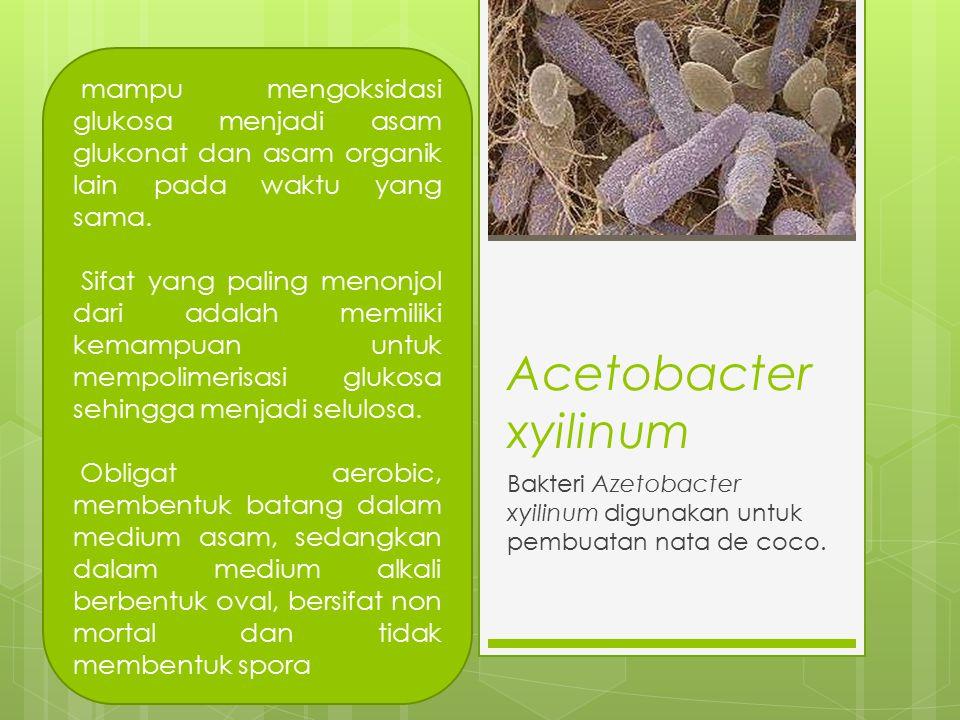 Acetobacter xyilinum Bakteri Azetobacter xyilinum digunakan untuk pembuatan nata de coco. mampu mengoksidasi glukosa menjadi asam glukonat dan asam or