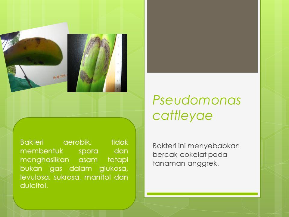 Pseudomonas cattleyae Bakteri ini menyebabkan bercak cokelat pada tanaman anggrek. Bakteri aerobik, tidak membentuk spora dan menghasilkan asam tetapi