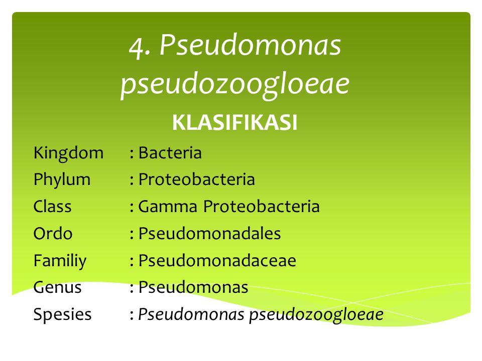 4. Pseudomonas pseudozoogloeae KLASIFIKASI Kingdom: Bacteria Phylum: Proteobacteria Class: Gamma Proteobacteria Ordo: Pseudomonadales Familiy: Pseudom