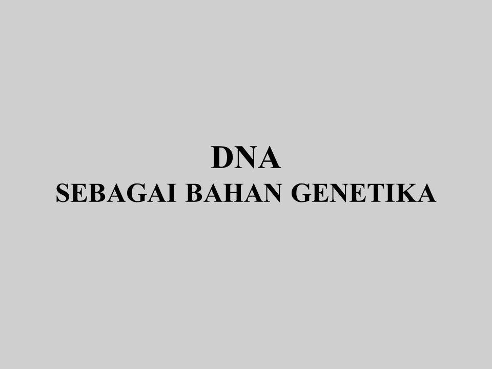 DNA SEBAGAI BAHAN GENETIKA