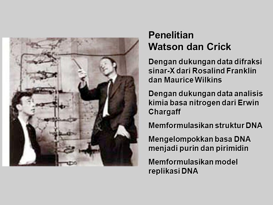 Penelitian Watson dan Crick Dengan dukungan data difraksi sinar-X dari Rosalind Franklin dan Maurice Wilkins Dengan dukungan data analisis kimia basa