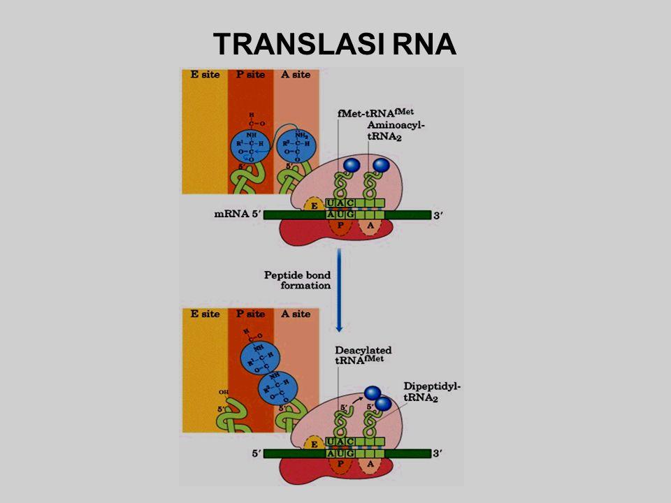 TRANSLASI RNA