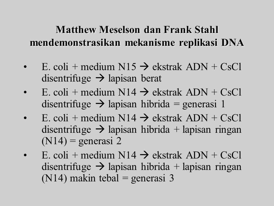 Matthew Meselson dan Frank Stahl mendemonstrasikan mekanisme replikasi DNA E.