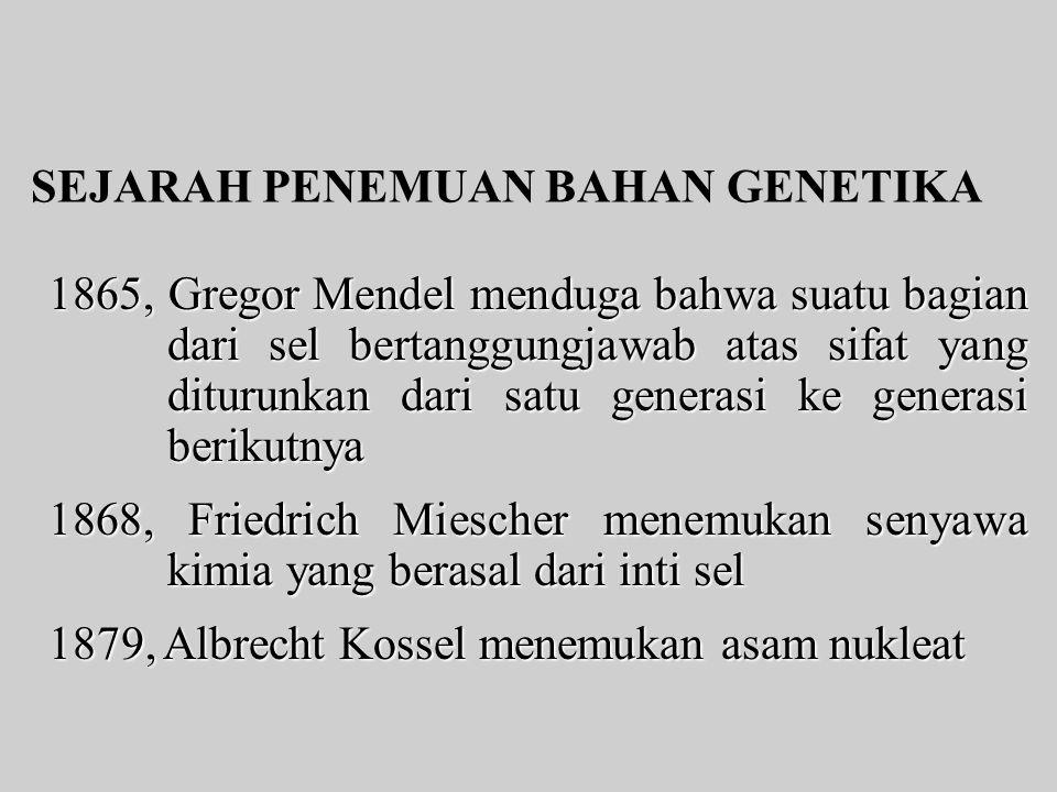 SEJARAH PENEMUAN BAHAN GENETIKA 1865, Gregor Mendel menduga bahwa suatu bagian dari sel bertanggungjawab atas sifat yang diturunkan dari satu generasi ke generasi berikutnya 1868, Friedrich Miescher menemukan senyawa kimia yang berasal dari inti sel 1879, Albrecht Kossel menemukan asam nukleat