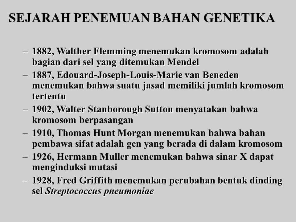 SEJARAH PENEMUAN BAHAN GENETIKA –1882, Walther Flemming menemukan kromosom bagian dari sel yang ditemukan Mendel –1882, Walther Flemming menemukan kromosom adalah bagian dari sel yang ditemukan Mendel –1887, Edouard-Joseph-Louis-Marie van Beneden menemukan bahwa suatu jasad memiliki jumlah kromosom tertentu –1902, Walter Stanborough Sutton –1902, Walter Stanborough Sutton menyatakan bahwa kromosom berpasangan –1910, Thomas Hunt Morgan menemukan bahwa bahan pembawa sifat adalah gen yang berada di dalam kromosom –1926, Hermann Muller menemukan bahwa sinar X dapat menginduksi mutasi –1928, Fred Griffith menemukan perubahan bentuk dinding sel Streptococcus pneumoniae