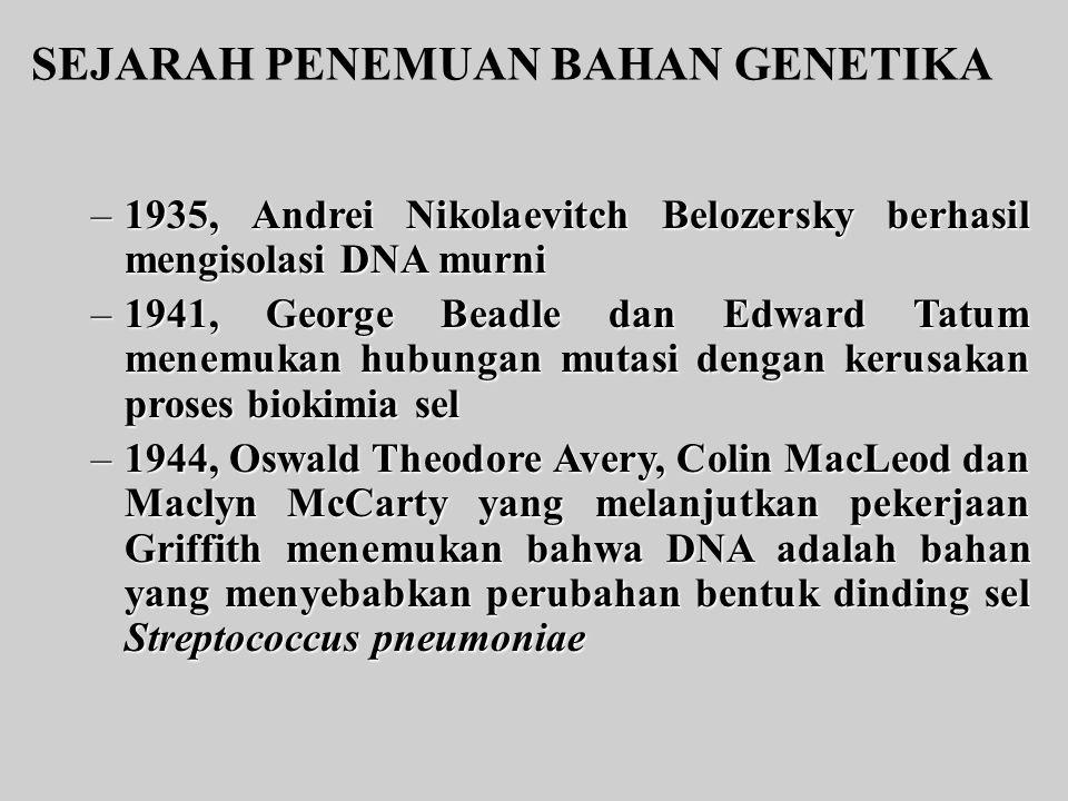 SEJARAH PENEMUAN BAHAN GENETIKA –1935, Andrei Nikolaevitch Belozersky berhasil mengisolasi DNA murni –1941, GeorgeBeadle dan Edward Tatum menemukan hu