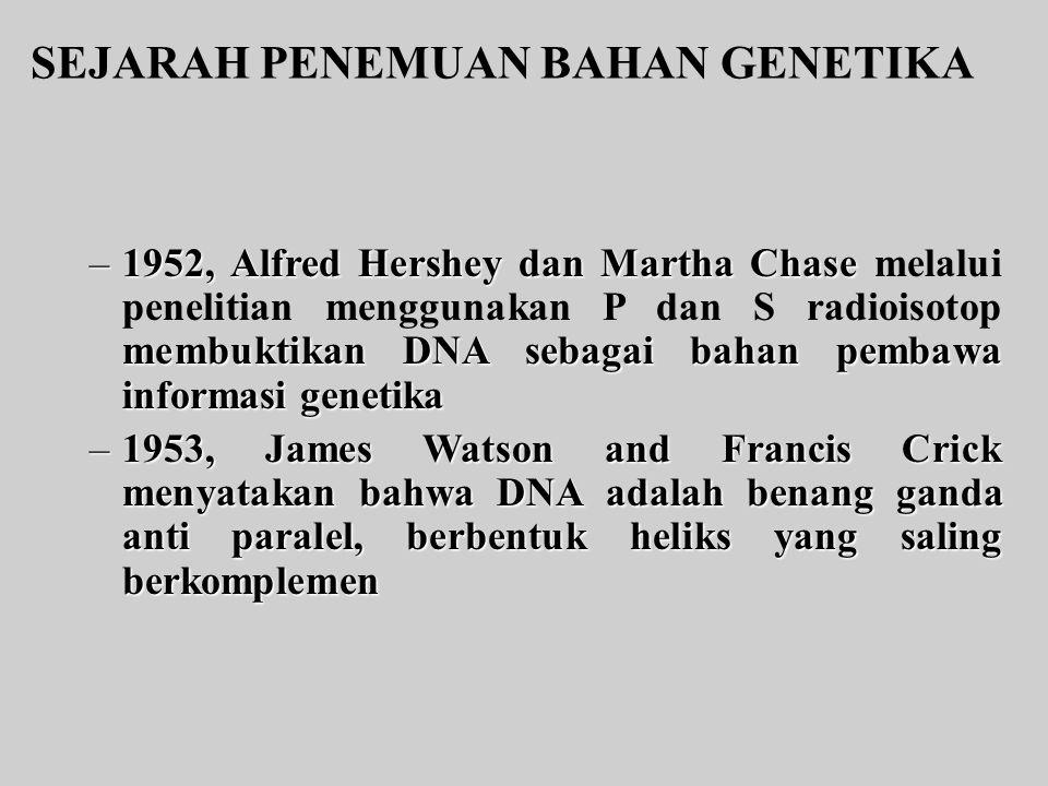 SEJARAH PENEMUAN BAHAN GENETIKA –1952, Alfred Hershey dan Martha Chase membuktikan DNA sebagai bahan pembawa informasi genetika –1952, Alfred Hershey dan Martha Chase melalui penelitian menggunakan P dan S radioisotop membuktikan DNA sebagai bahan pembawa informasi genetika –1953, James Watson and Francis Crick menyatakan bahwa DNA adalah benang ganda anti paralel, berbentuk heliks yang saling berkomplemen