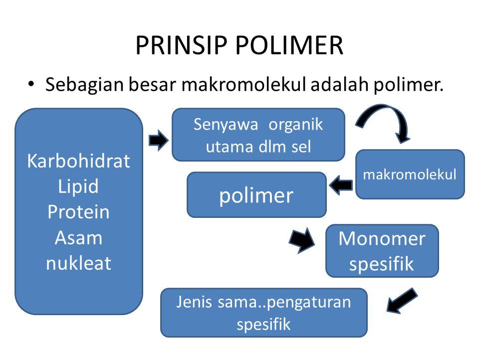 Materi hidup terutama terbuat dari C, O, H dan N dengan sedikit S dan P.