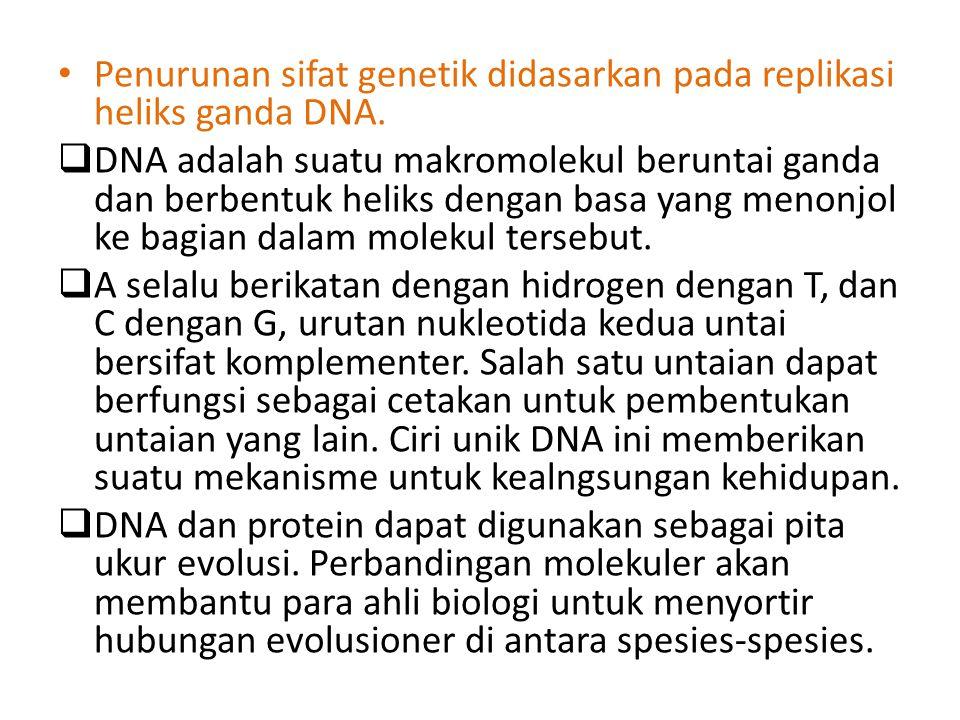 Untaian asam nukleat merupakan polimer nukleotida.