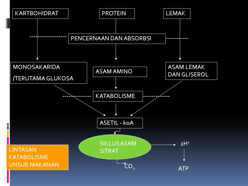 KARTBOHIDRAT PROTEINLEMAK PENCERNAAN DAN ABSORBSI MONOSAKARIDA /TERUTAMA GLUKOSA ASAM AMINO ASAM LEMAK DAN GLISEROL KATABOLISME ----------------------