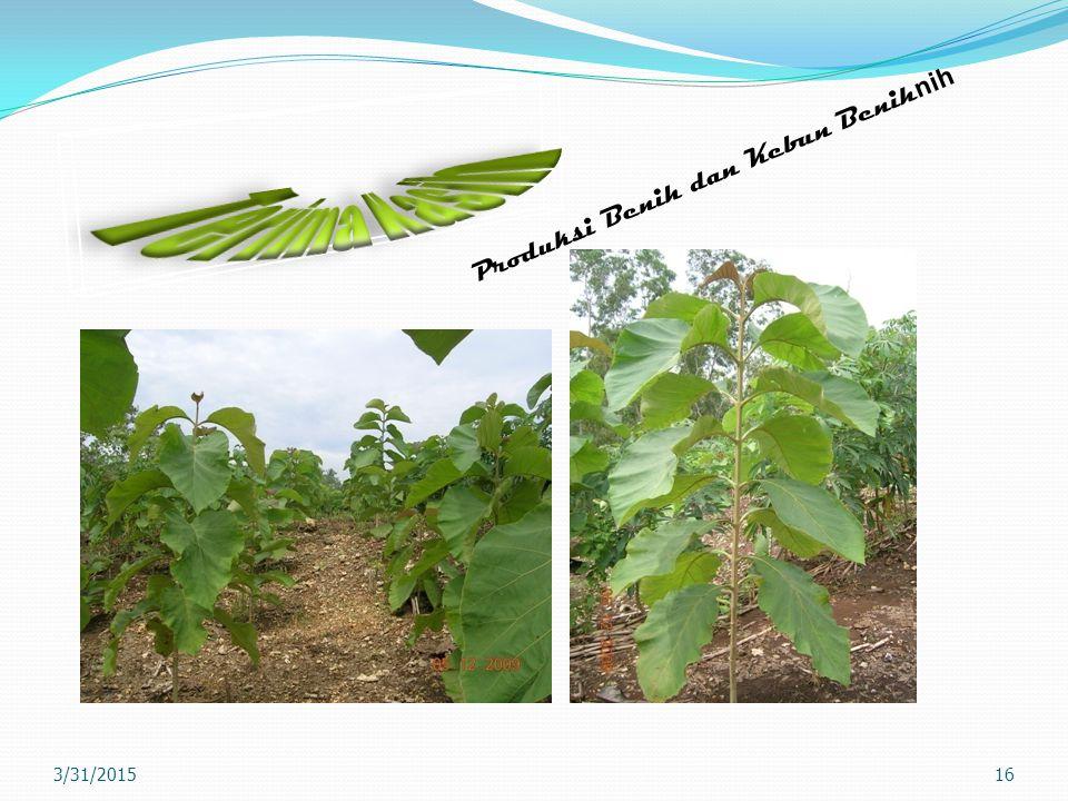 16 Produksi Benih dan Kebun Benih nih 3/31/2015