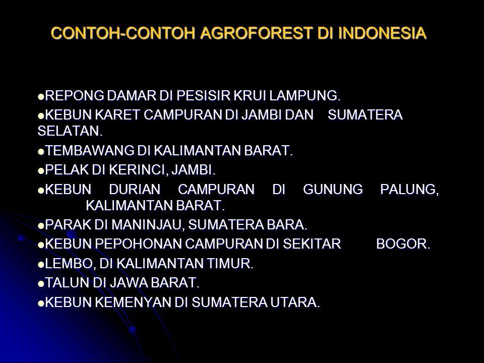 CONTOH-CONTOH AGROFOREST DI INDONESIA REPONG DAMAR DI PESISIR KRUI LAMPUNG. REPONG DAMAR DI PESISIR KRUI LAMPUNG. KEBUN KARET CAMPURAN DI JAMBI DAN SU