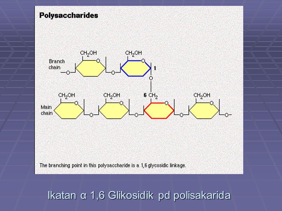 Ikatan α 1,6 Glikosidik pd polisakarida