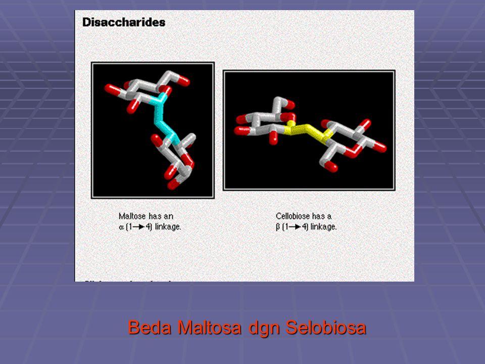 Amilum : * Mempunyai rantai lurus ( ikatan α -1,4 glikosidik ) dan rantai cabang ( ikatan α -1,6 glikosidik ) * Mempunyai rantai lurus ( ikatan α -1,4 glikosidik ) dan rantai cabang ( ikatan α -1,6 glikosidik ) * Terdapat pada tumbuh2an : biji2an ( padi/beras, gan- * Terdapat pada tumbuh2an : biji2an ( padi/beras, gan- dum, jagung dll.