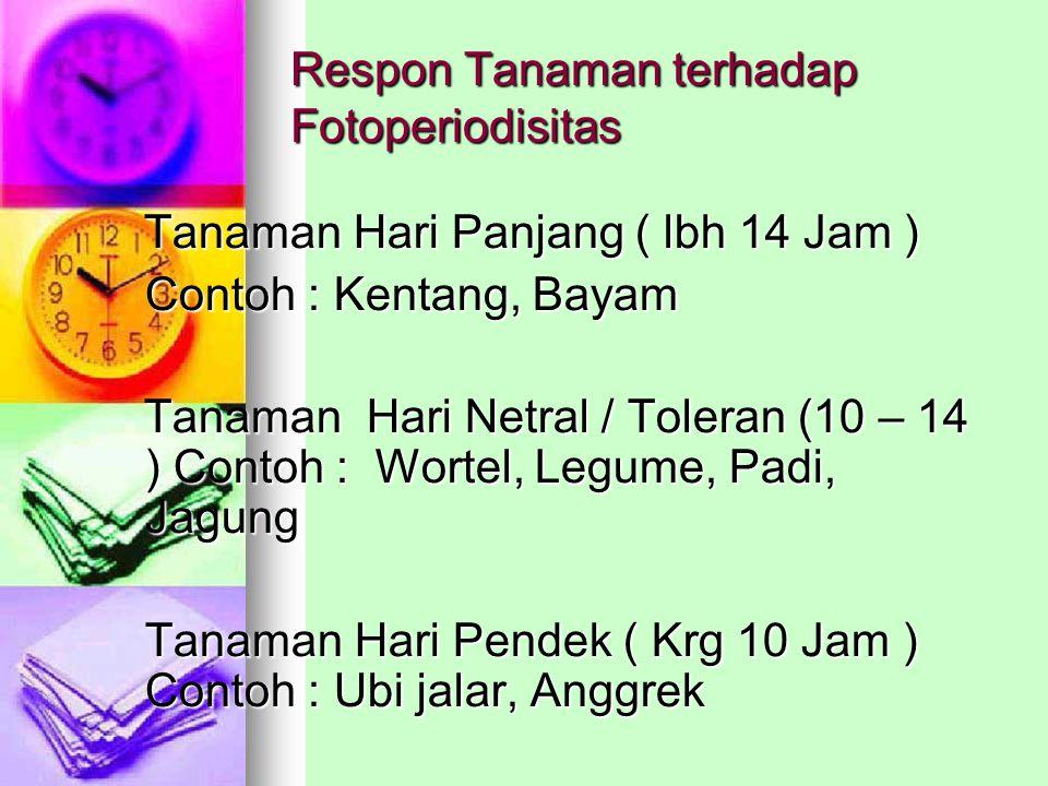 Respon Tanaman terhadap Fotoperiodisitas Tanaman Hari Panjang ( lbh 14 Jam ) Tanaman Hari Panjang ( lbh 14 Jam ) Contoh : Kentang, Bayam Tanaman Hari