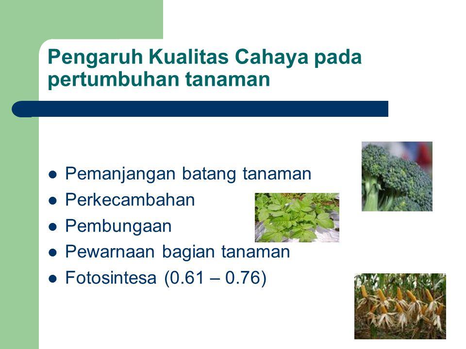 Pengaruh Kualitas Cahaya pada pertumbuhan tanaman Pemanjangan batang tanaman Perkecambahan Pembungaan Pewarnaan bagian tanaman Fotosintesa (0.61 – 0.7