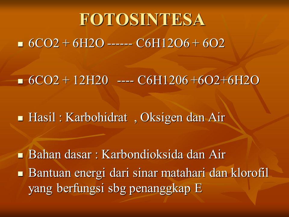 FOTOSINTESA 6CO2 + 6H2O ------ C6H12O6 + 6O2 6CO2 + 6H2O ------ C6H12O6 + 6O2 6CO2 + 12H20 ---- C6H1206 +6O2+6H2O 6CO2 + 12H20 ---- C6H1206 +6O2+6H2O