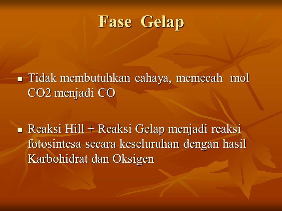 Fase Gelap Tidak membutuhkan cahaya, memecah mol CO2 menjadi CO Tidak membutuhkan cahaya, memecah mol CO2 menjadi CO Reaksi Hill + Reaksi Gelap menjad