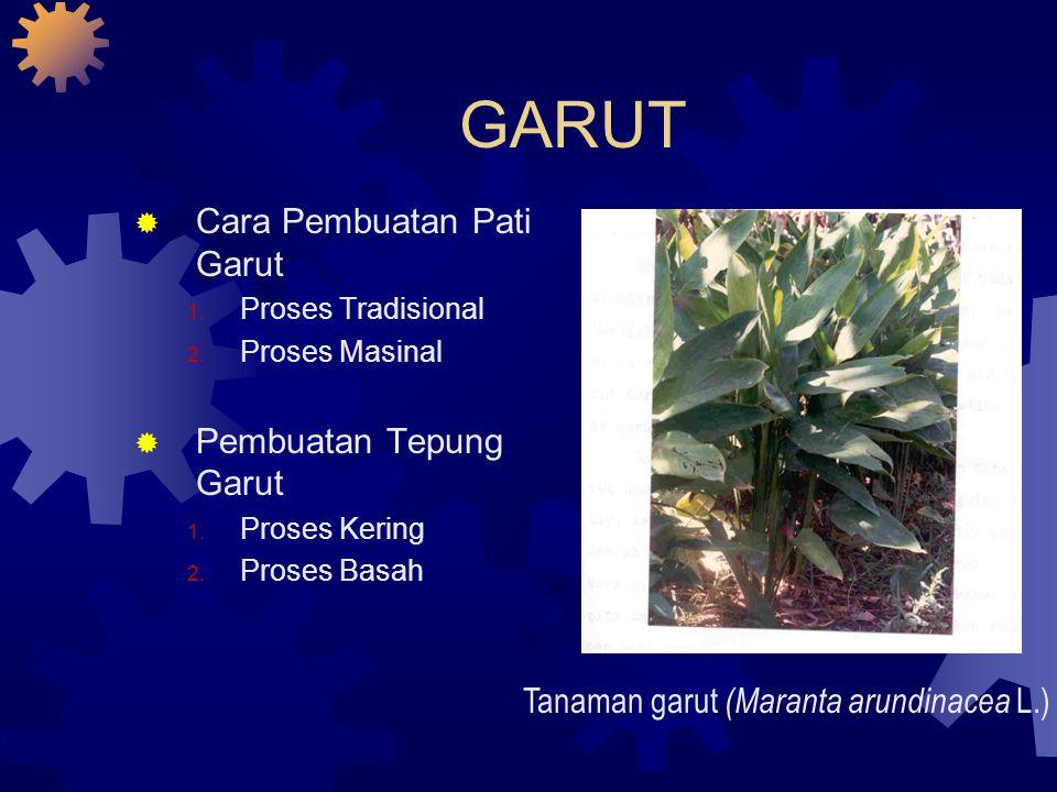 GARUT  Cara Pembuatan Pati Garut 1. Proses Tradisional 2. Proses Masinal  Pembuatan Tepung Garut 1. Proses Kering 2. Proses Basah Tanaman garut (Mar