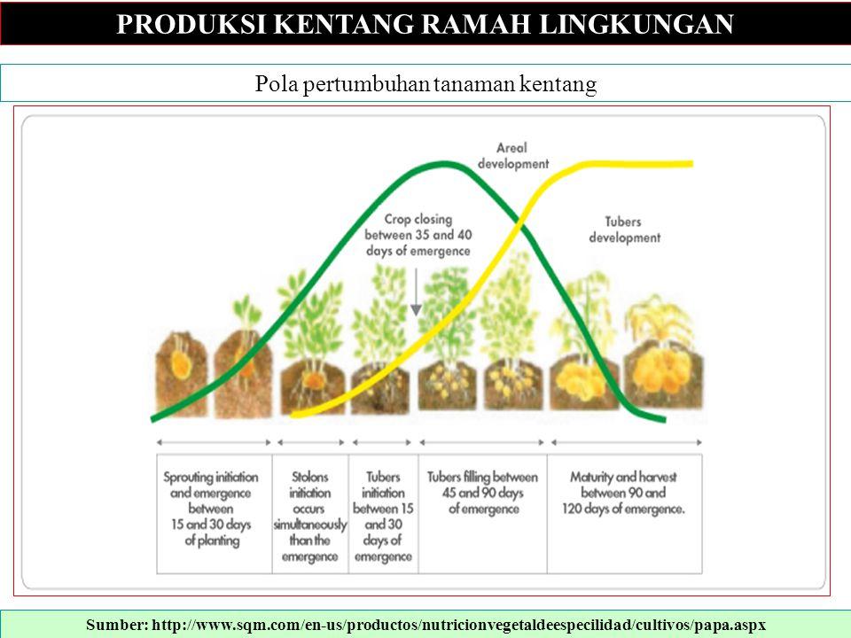 PRODUKSI KENTANG RAMAH LINGKUNGAN Pola pertumbuhan tanaman kentang Sumber: http://www.sqm.com/en-us/productos/nutricionvegetaldeespecilidad/cultivos/p