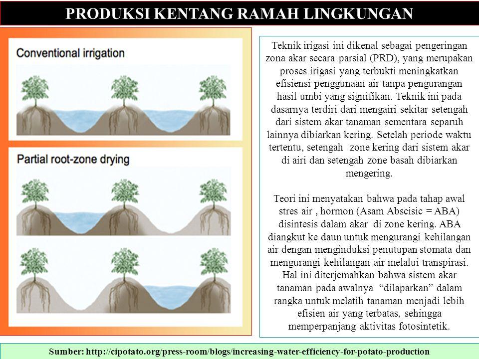 PRODUKSI KENTANG RAMAH LINGKUNGAN Teknik irigasi ini dikenal sebagai pengeringan zona akar secara parsial (PRD), yang merupakan proses irigasi yang te