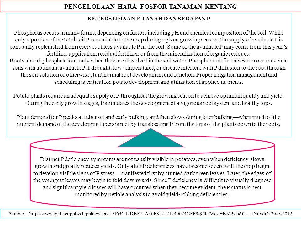 PENGELOLAAN HARA FOSFOR TANAMAN KENTANG KETERSEDIAAN P-TANAH DAN SERAPAN P Phosphorus occurs in many forms, depending on factors including pH and chem